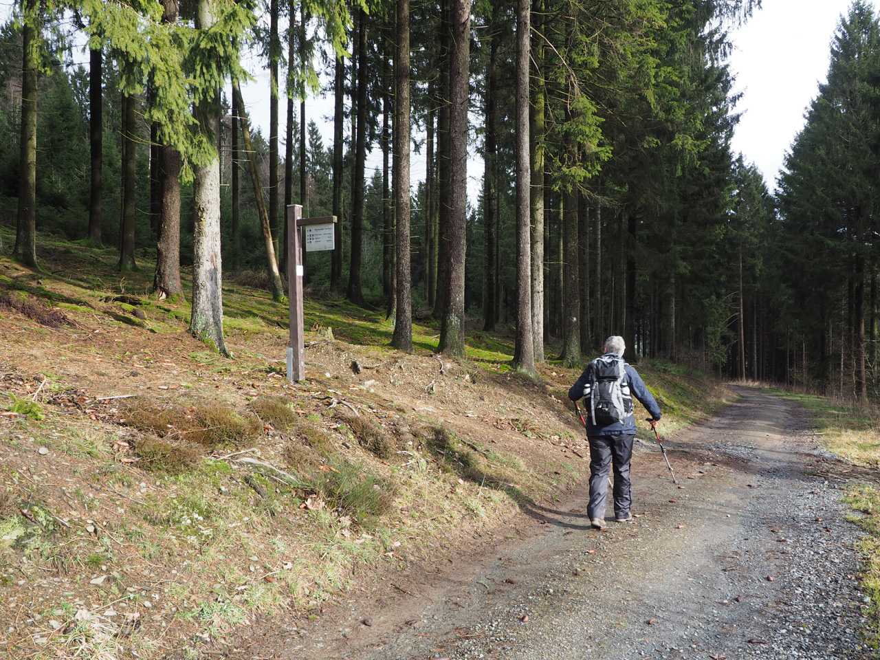 heerlijke wandelen door de bossen