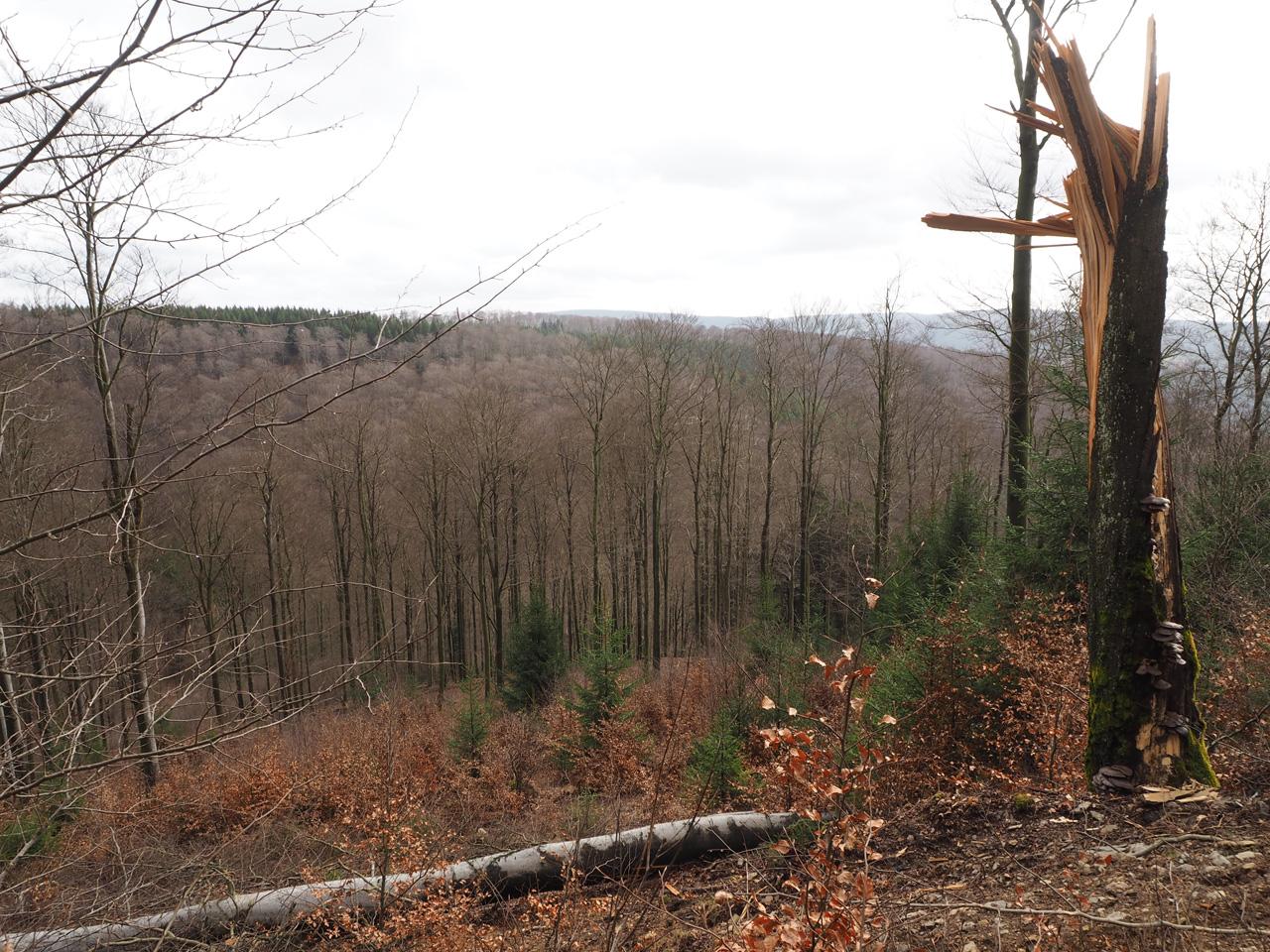 kale bomen halfweg februari