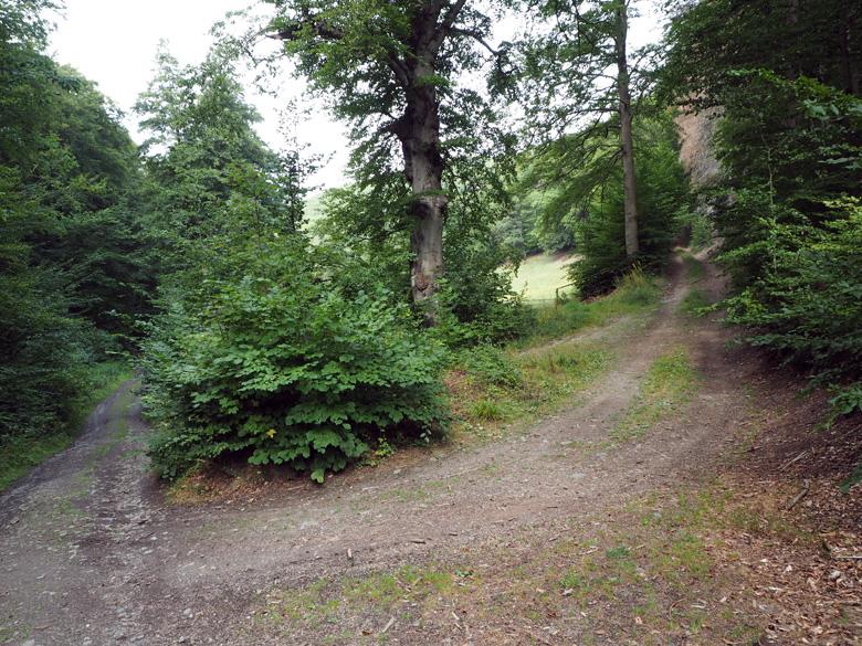 een splitsing in het bos