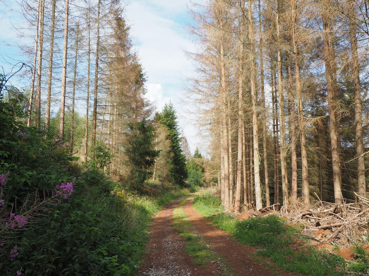 boslaan langs de Allerbach