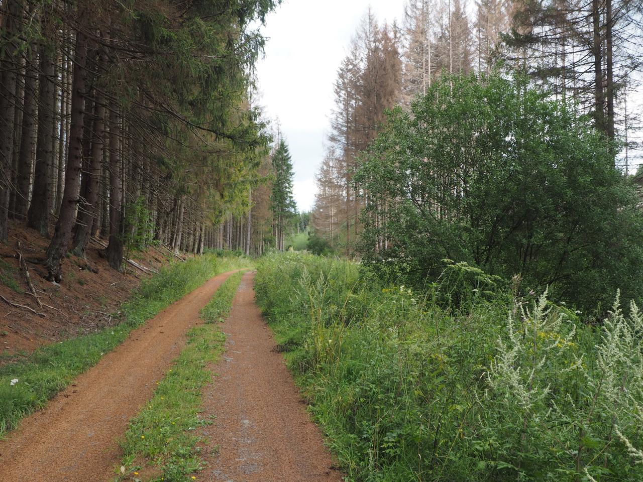 gemoedelijk wandelen over de boswegen