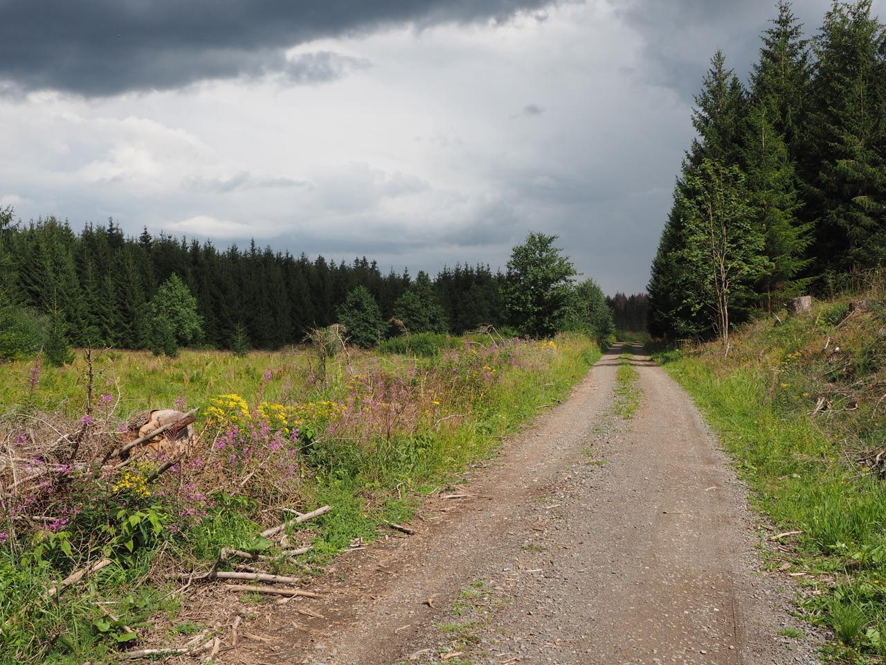 uitgestrekte bossen en open gedeelten
