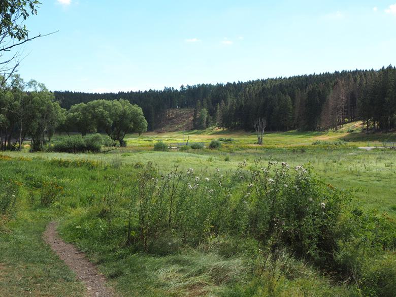 eerste blik op het Mandelholz