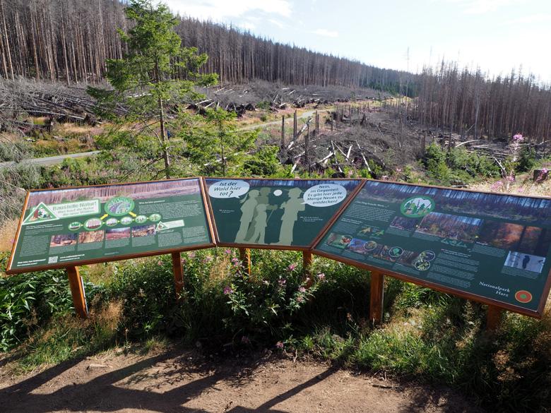 informatiepaneel situatie Harz bossen