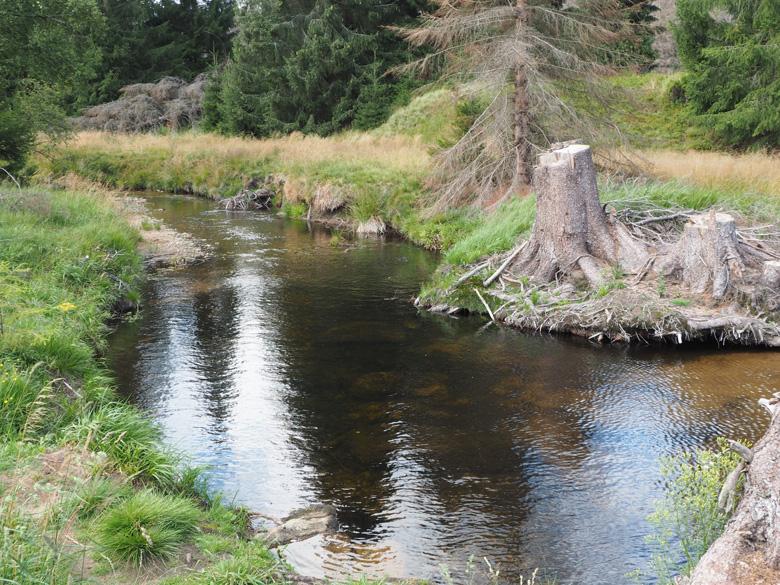 mooie plekjes langs het veenbruine water