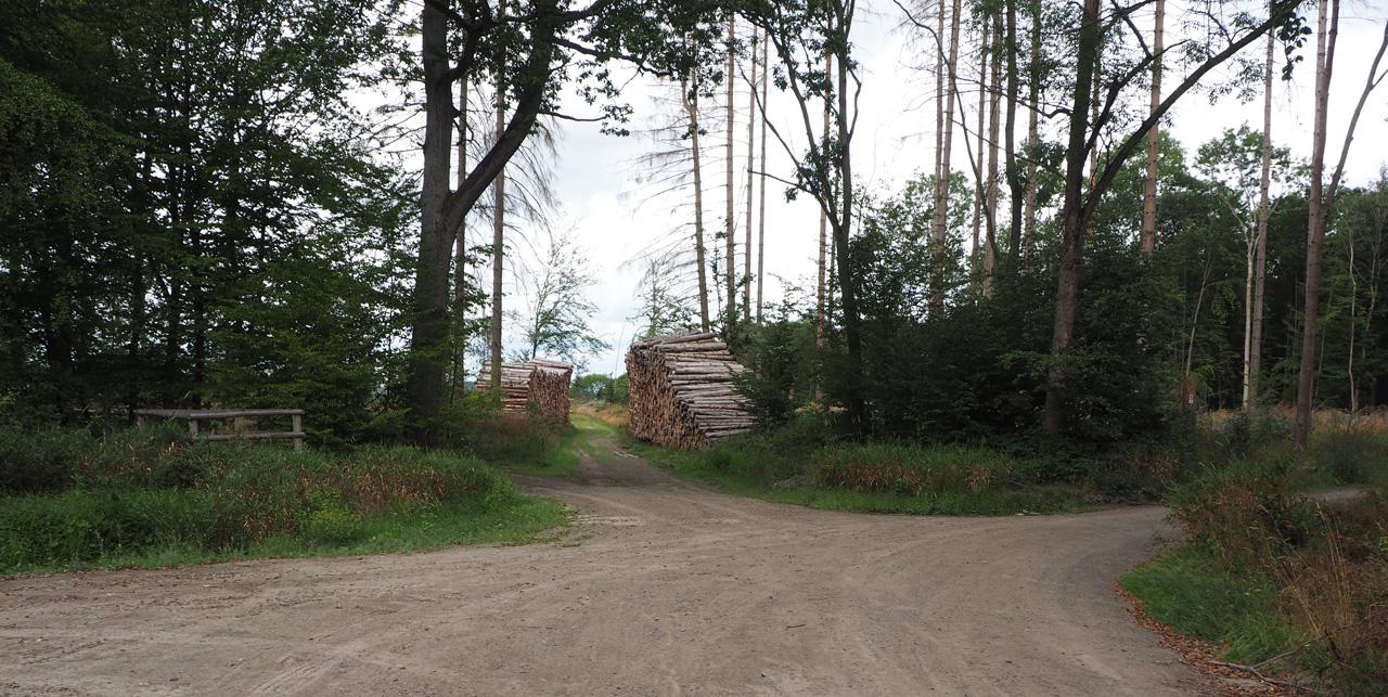 een vijfsprong in het bos