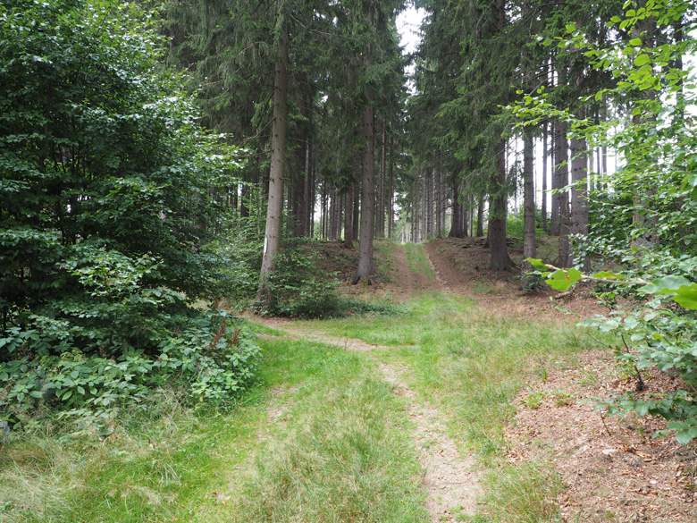 kruising in het bos