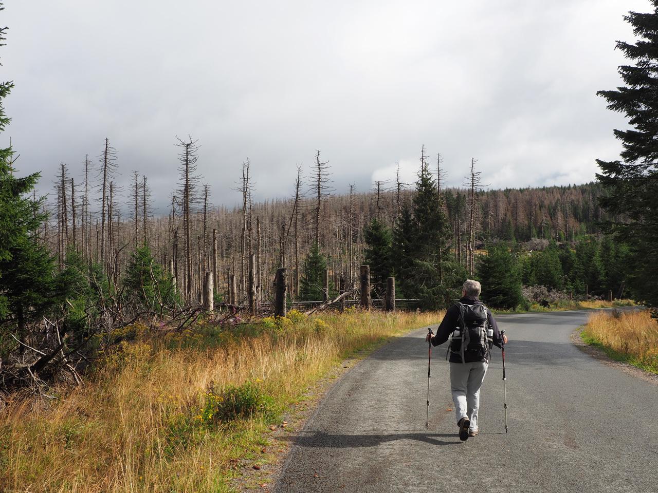 op weg naar de Urwaldstieg