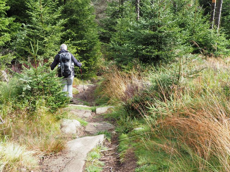 smal pad in het dichte bos