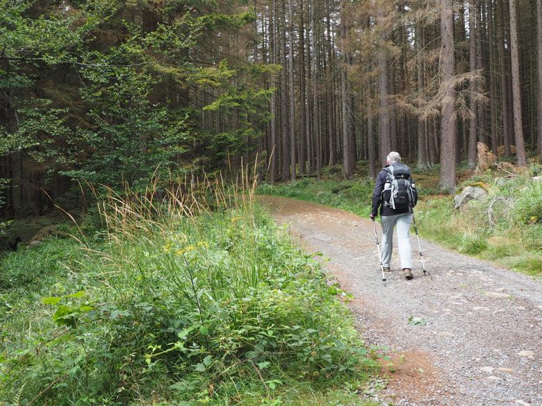 vlak lopen door het bos