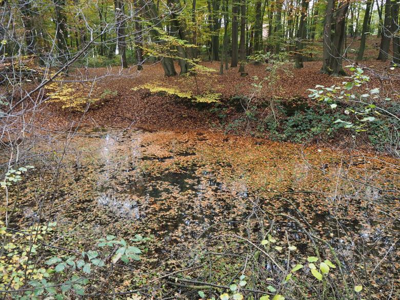 een serie vijvers in het bos