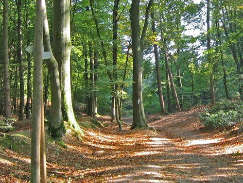 de Hermannsweg achter de camping