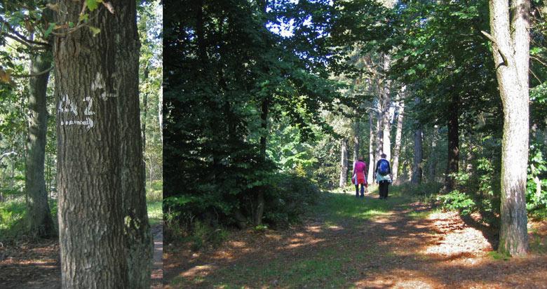 de A2 gaat links omlaag het bos in