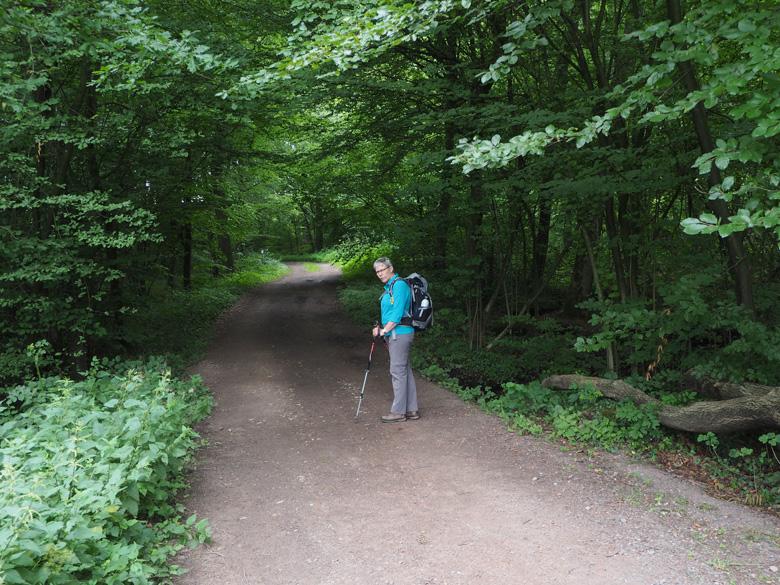 dicht bos en waterloopjes