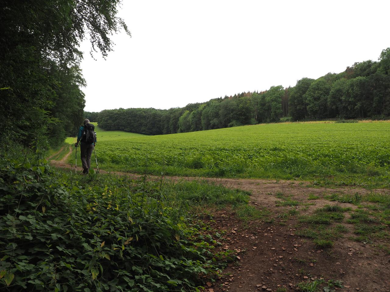 stukjes natuurschoon en maisvelden