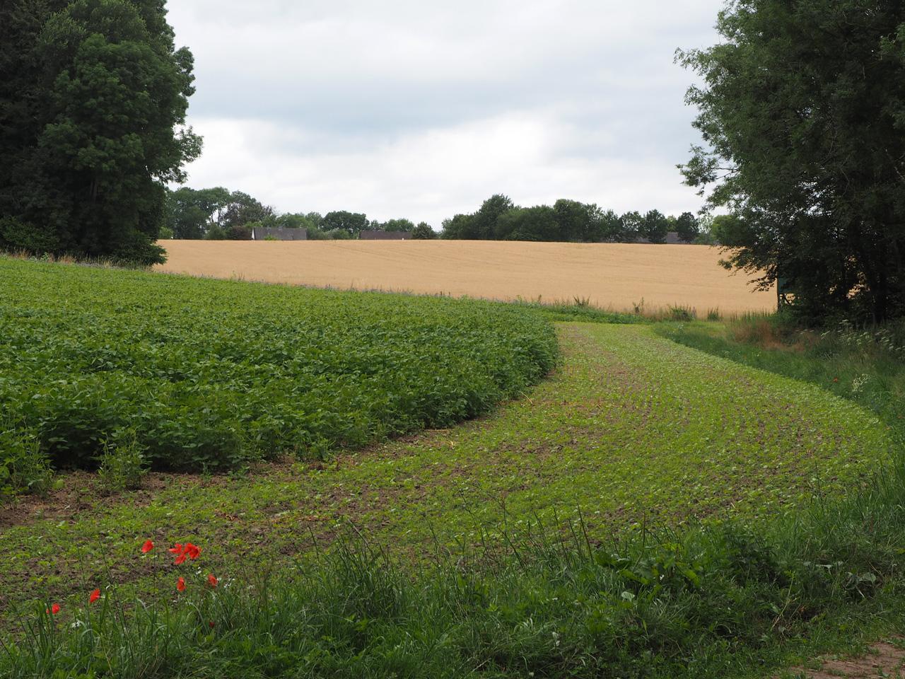 verspreid liggende boerderijen