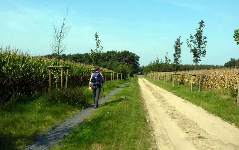 lange rechte weg terug door bospercelen en langs velden
