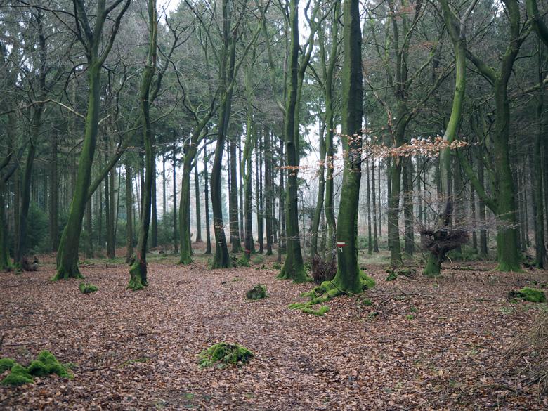 een mooi bos op de Kellenberg