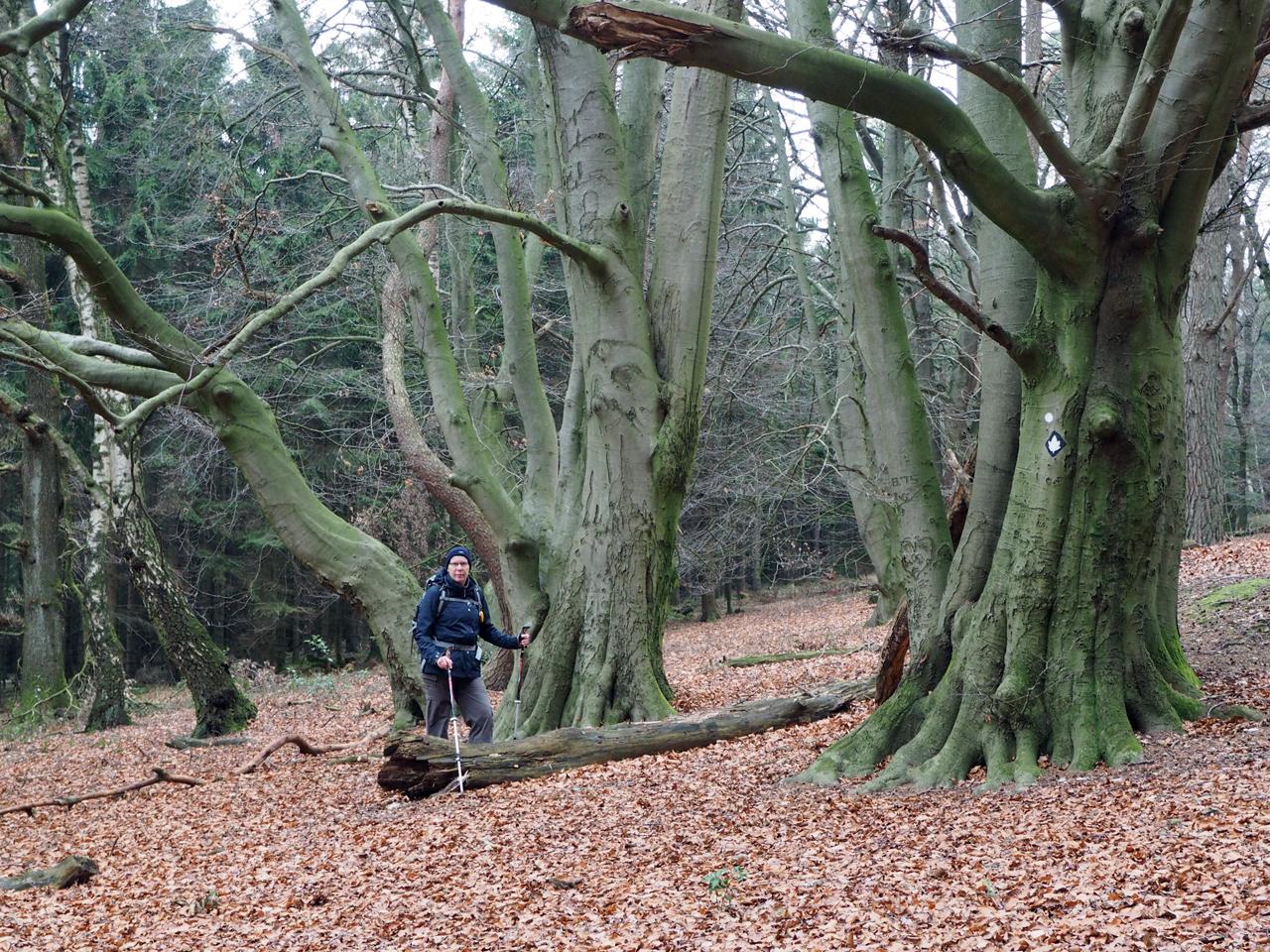 opvallende bomen bij de afdaling