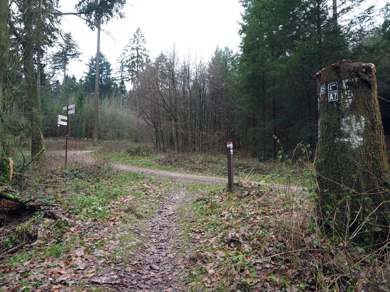 aansluiting met een bosweg