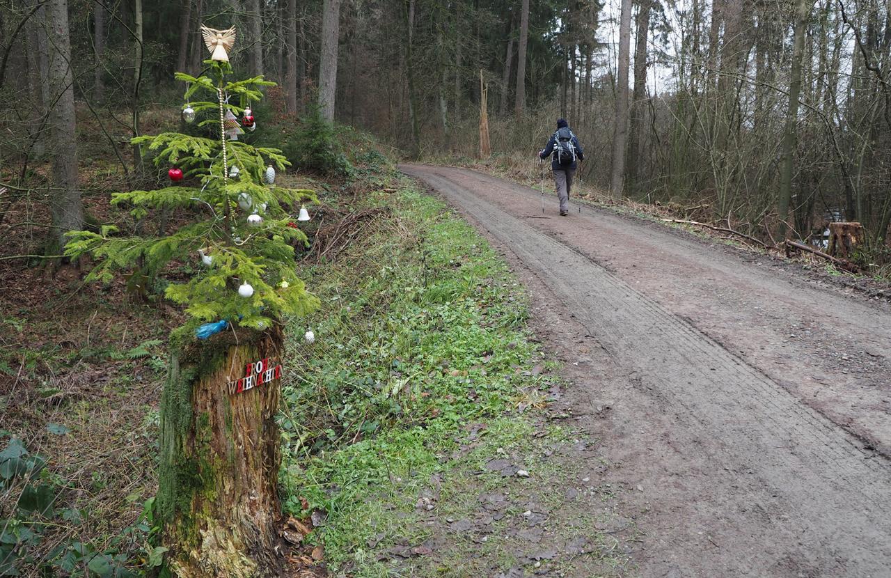 kerstversierselen in het bos
