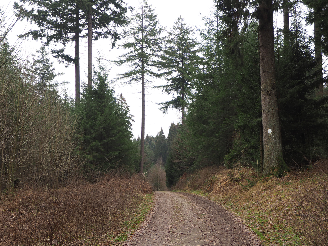 weer door dicht bos