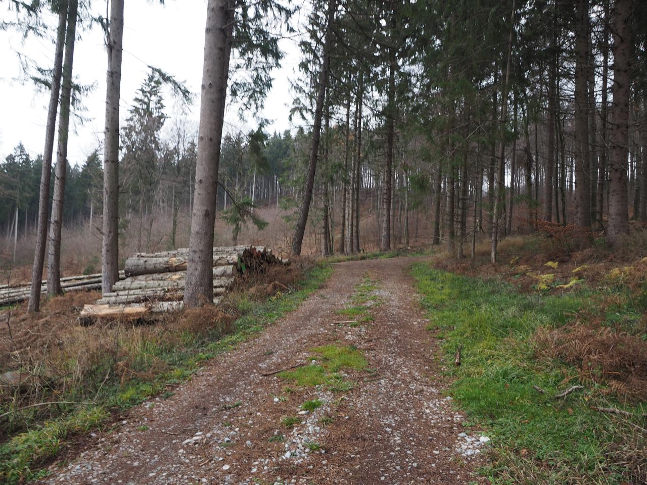 opnieuw omhoog in het bos