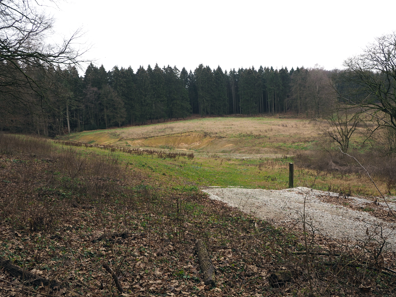 een open veld in het bos