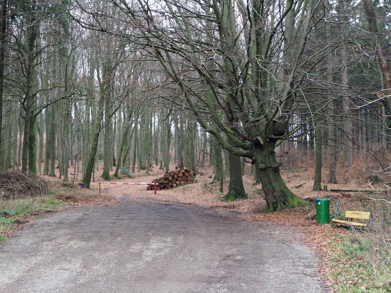 afkorting door het bos