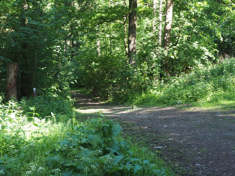 wandepad Ahorn Weg