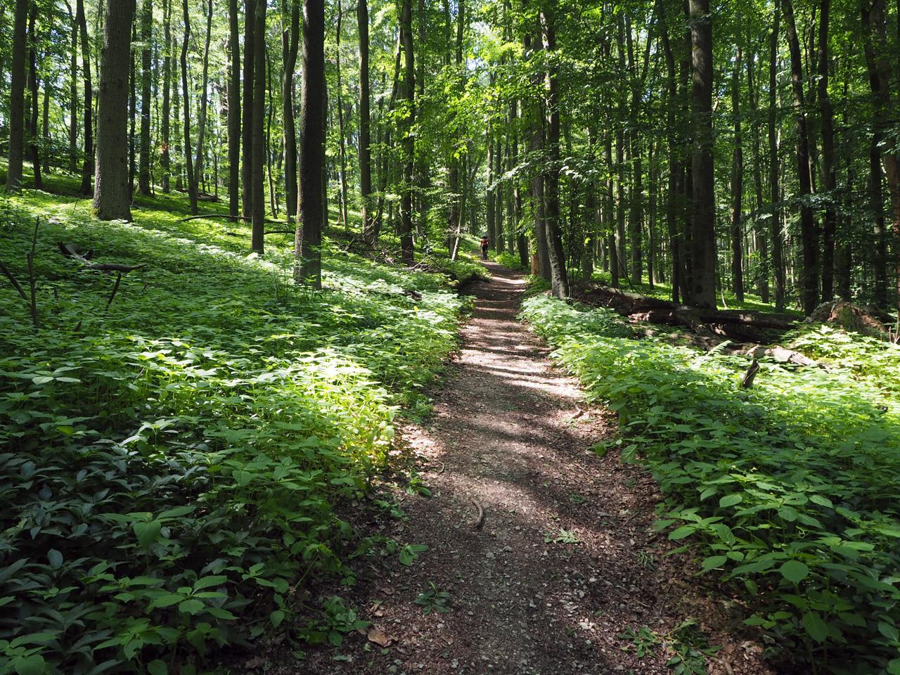 bos met een bijzondere ondergroei