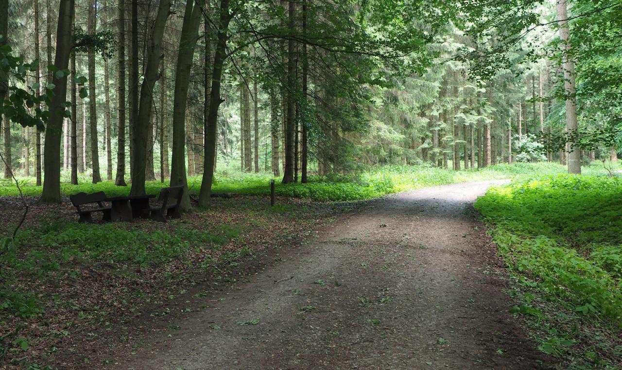 grafheuvels in het bos