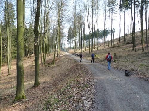 het pad stijgt licht door een prachtig bosgebied