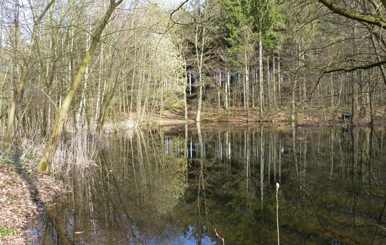 en weer een schitterende vijver, mooi in het bos gelegen