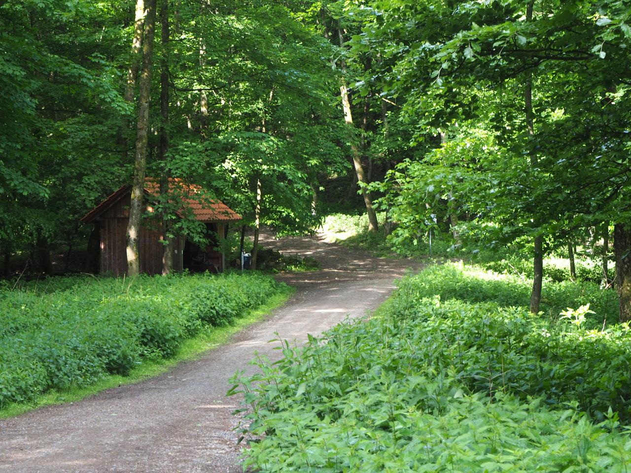 dan volgt een lange afdaling door een prachtig bos
