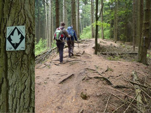 De Ahornroute markering volgen over de bergkam