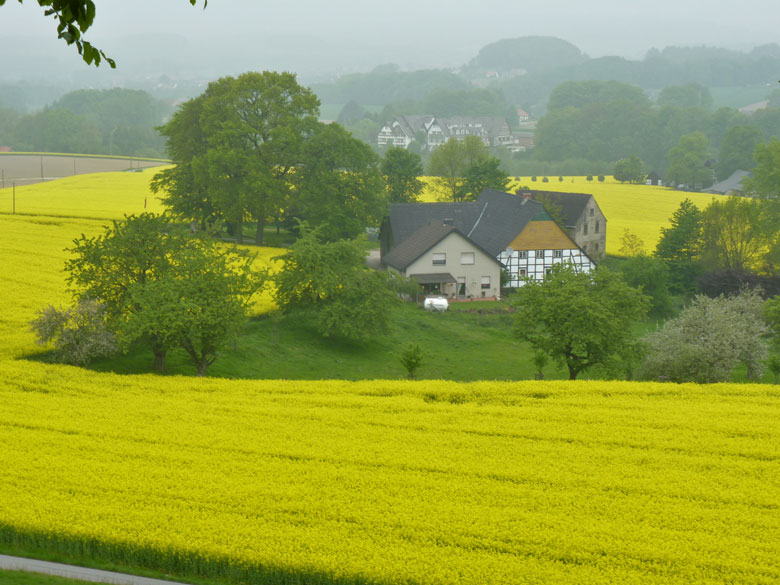 In het dal staan de koolzaadvelden in bloei