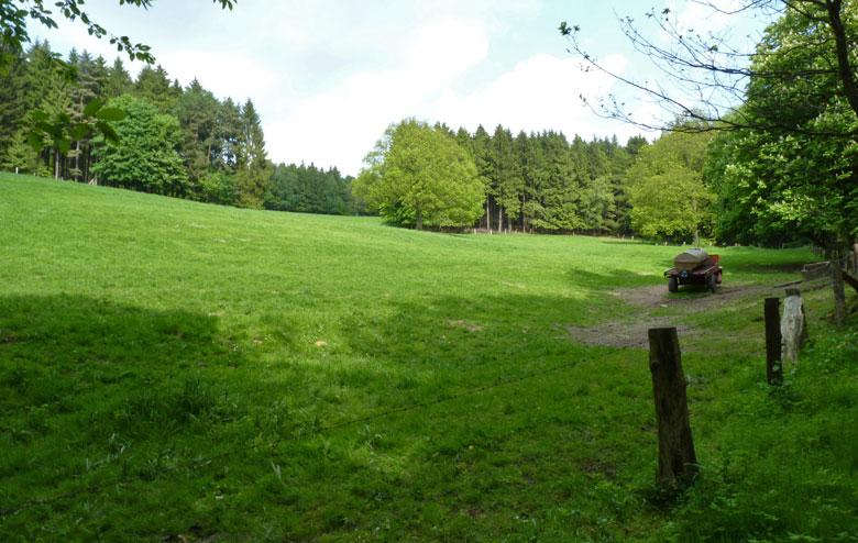een glooiend weiland waar we door een kudde koeien worden begroet