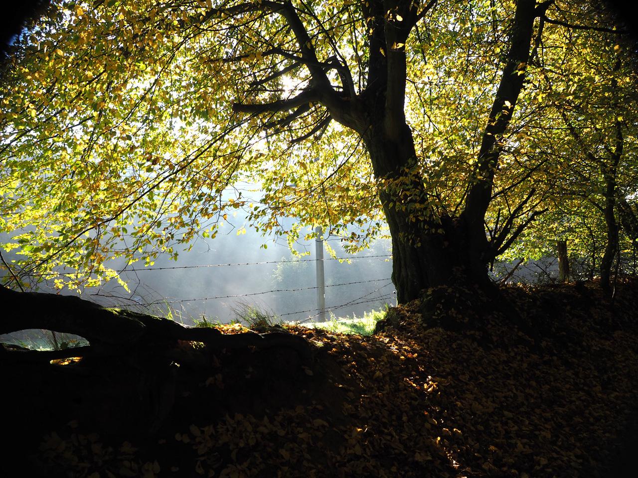 herfstsfeerje op de vroege morgen