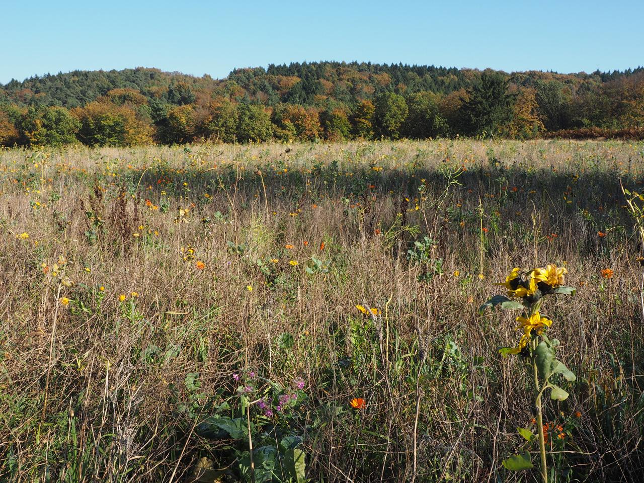 een kleurrijk veld wilde bloemen
