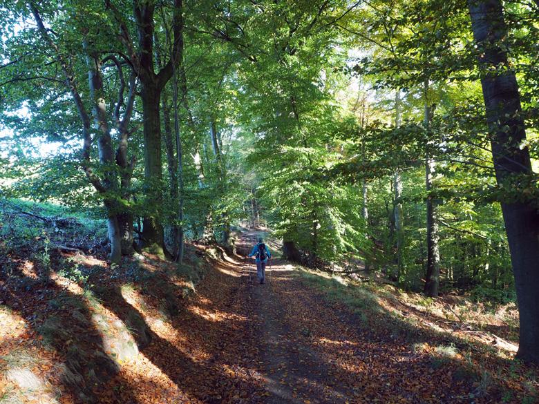 prachtige afdaling door het bos