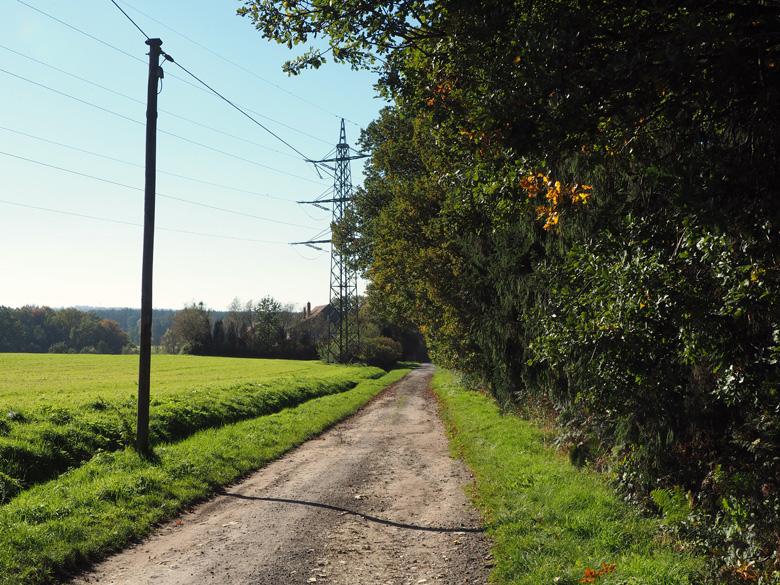halfverharde weg langs de bosrand