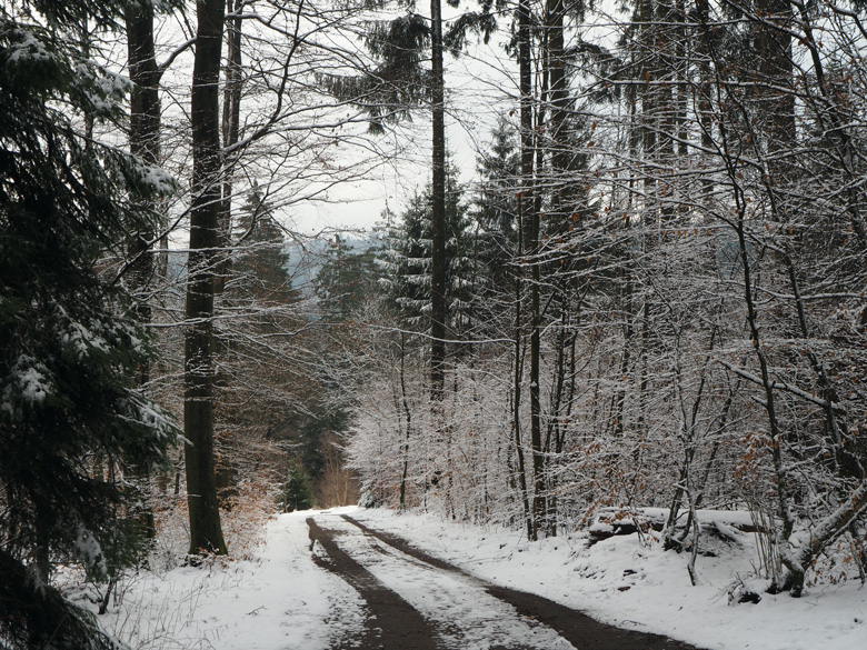 besneeuwde bosweg