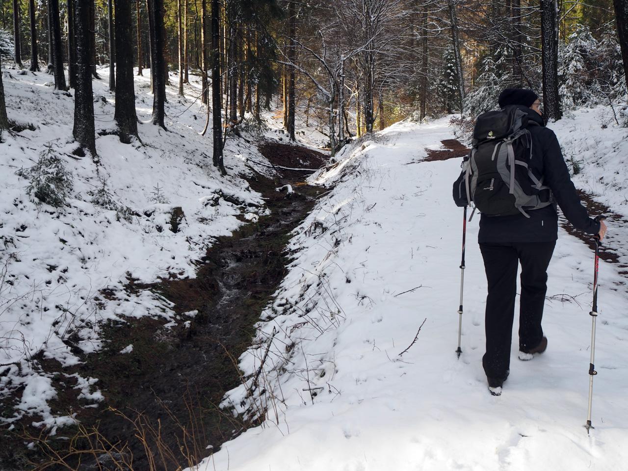 smal pad door uitgestrekte bossen