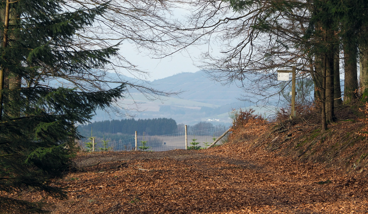 einde van het bospad