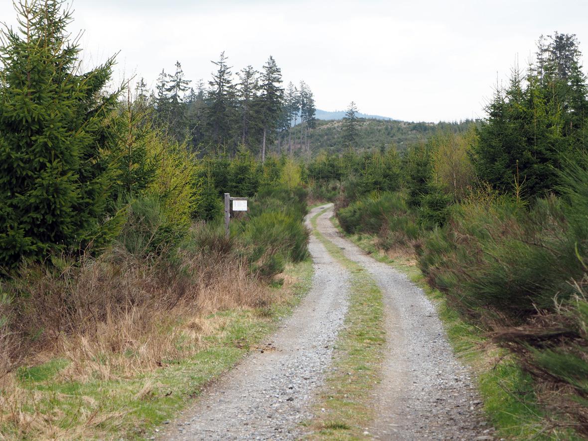 uitgestrekte bossen op de bergrug