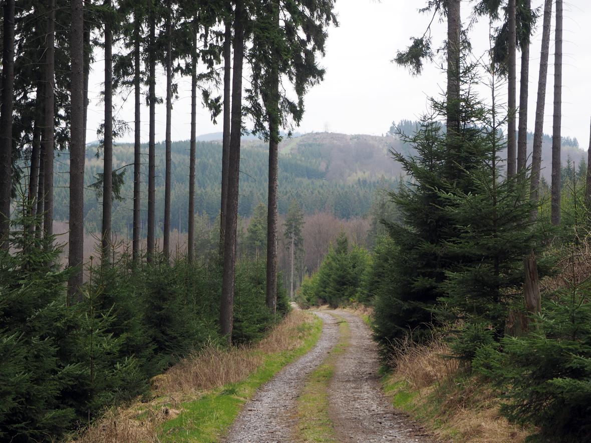 prachtige afwisselende bosgebieden