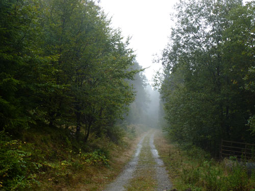 sfeervol bospad op een mistige morgen