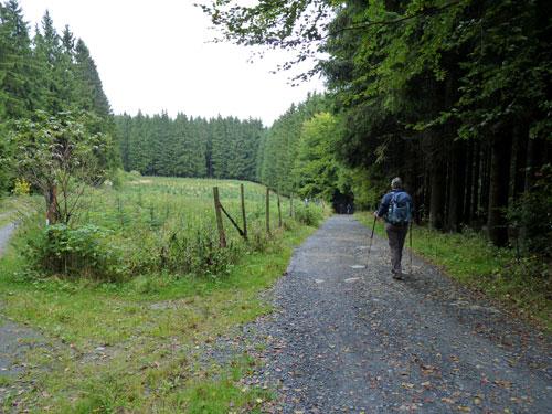 rechtsaf lopen omlaag naar een donker stukje bos