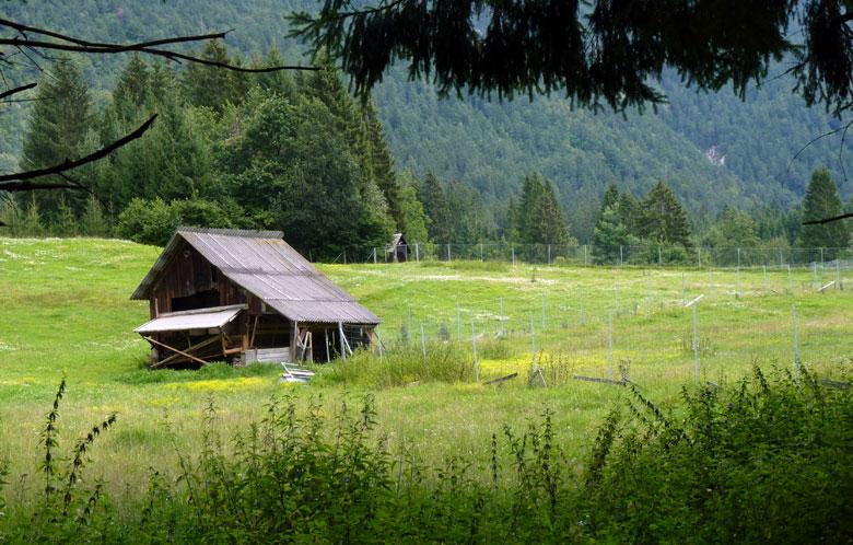 achter de bomenrij een eerste mooie Alpenwei